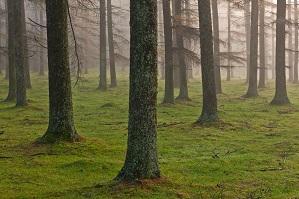 EQUO denuncia la contrarreforma medioambiental del PP