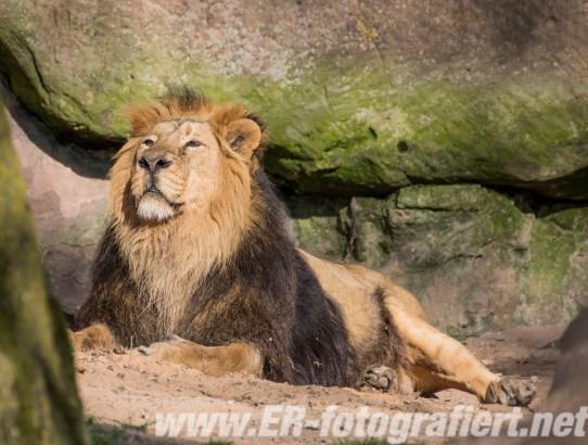 Neulich im Tiergarten Nürnberg