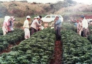植物防疫官の検査風景