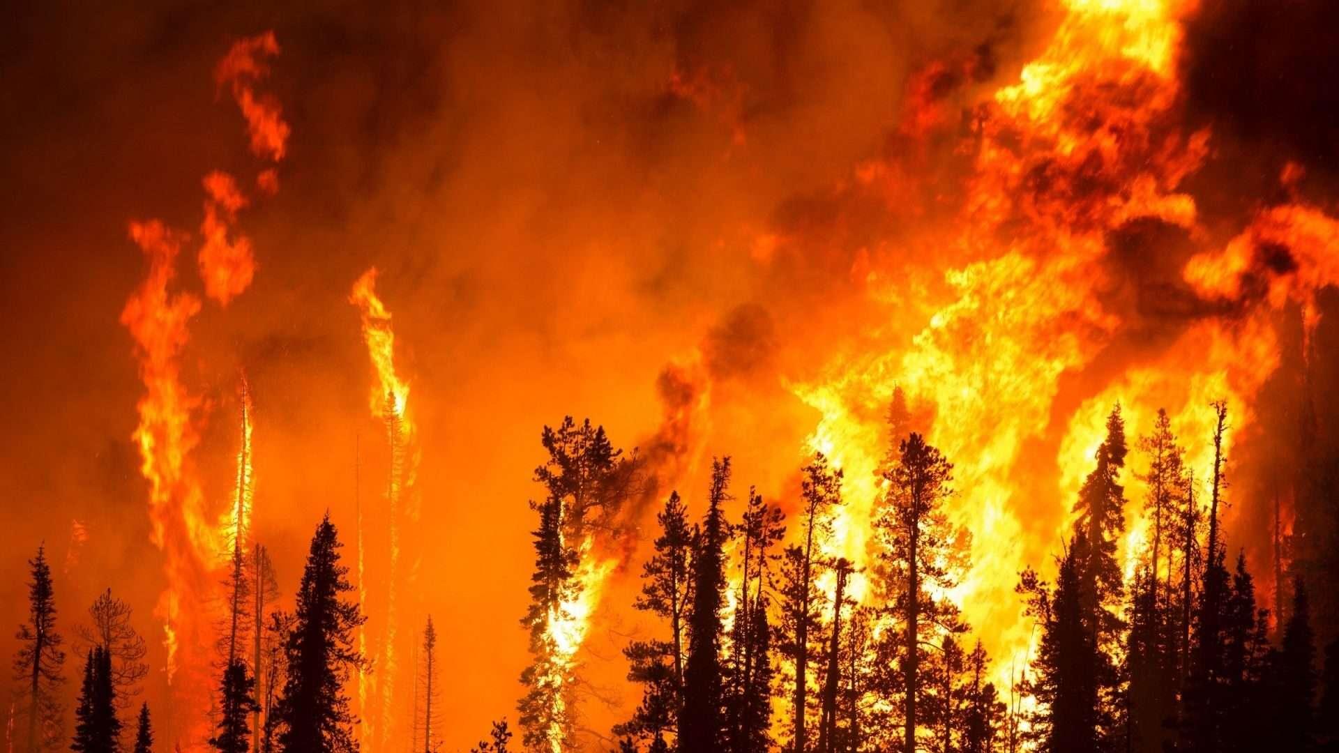 Αυτό που είναι σαφές είναι ότι οι άνθρωποι έχουν επηρεάσει τις συνθήκες πυρκαγιάς εδώ και χιλιετίες, και οι αλλαγές στις ανθρώπινες κοινωνίες (π.χ. από ντόπιους σε Ευρωπαίους, από την προϊστορική σε μεταβιομηχανική κ.λπ.) σημαίνουν αλλαγές στις συνθήκες πυρκαγιάς.