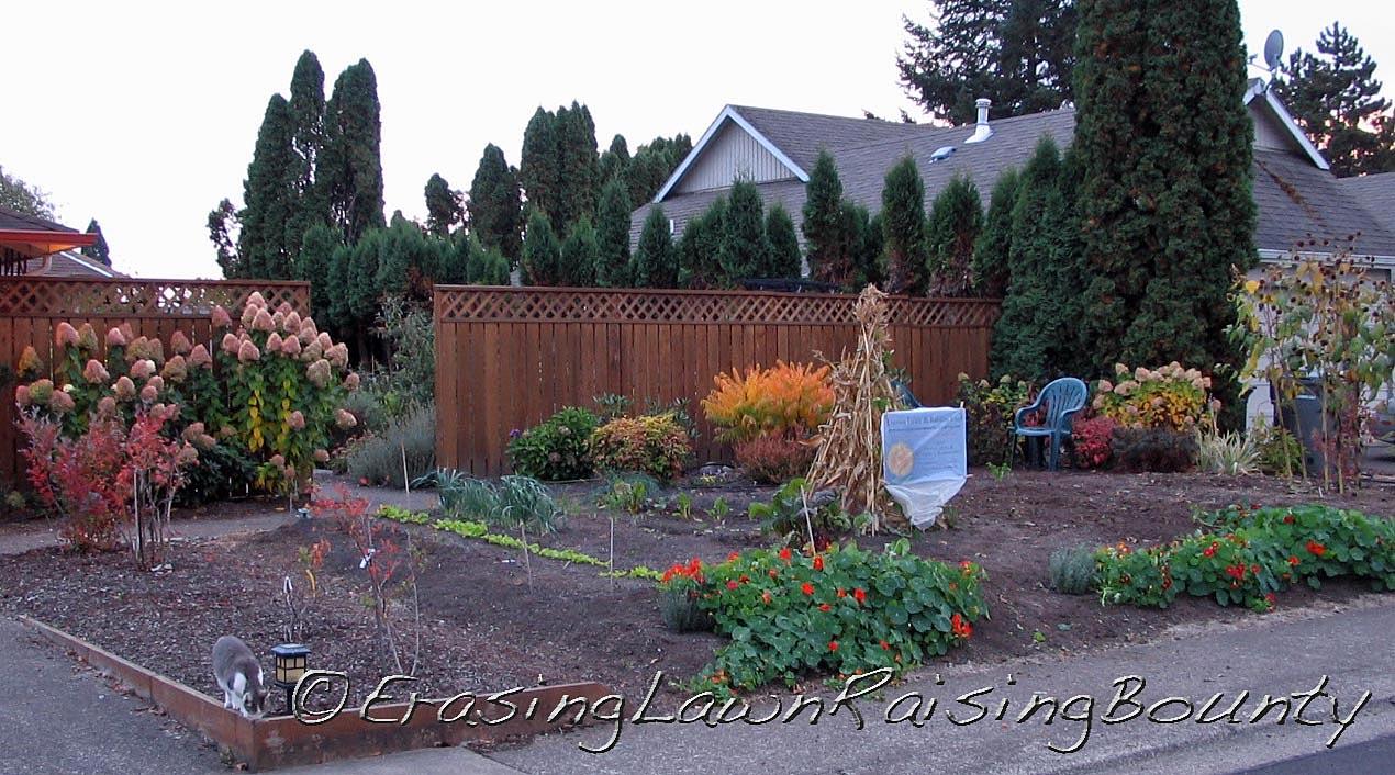 Mid-October transitions in the garden.  Where's Juniper?