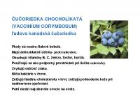 cucoriedka-chocholikata