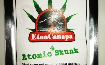 atomic skunk canapa legale