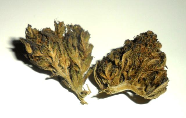 Fiore di canapa legale Blackriver di Erbula