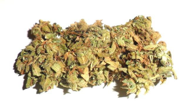 Fiore femminile di canapa legale Orange Kush