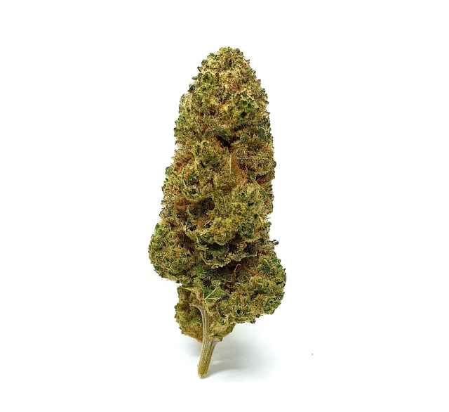 fiore di canapa light Monkey weed