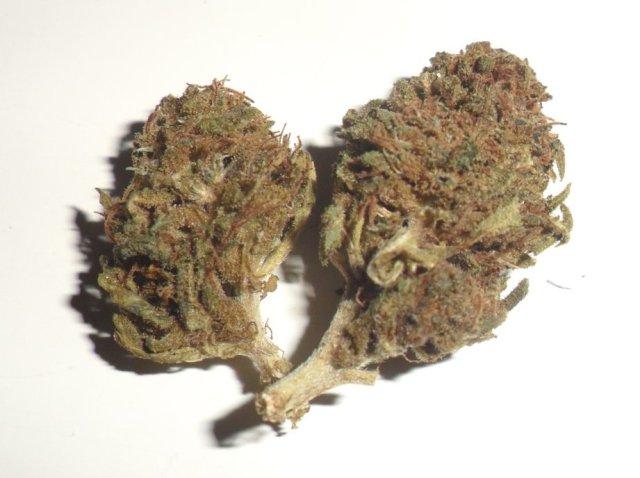 Infiorescenza femminile di canapa legale Dream Flower di Green Leaf