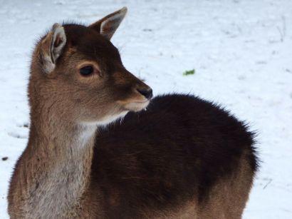 Winter 2017 - Sneeuw in Noordhorn (10)