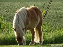 Paarden 02