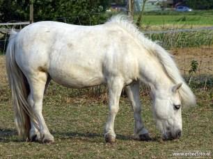 Pony Noordhorn (01)