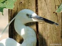 Aqua Zoo (Leeuwarden) 106