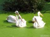 Aqua Zoo (Leeuwarden) 23