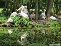 Aqua Zoo (Leeuwarden) 47