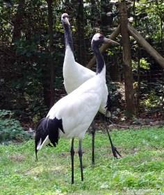Aqua Zoo (Leeuwarden) 63