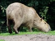 Aqua Zoo (Leeuwarden) 76