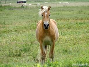Paard - Bakkerom