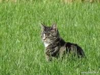 Kat in het Weiland