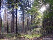 Landgoed Mensinge - Herfst (07)