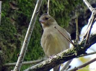 Landgoed Mensinge - Herfst (10) Vogeltje