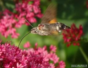 ErBeefoto_Eigen tuin - insect
