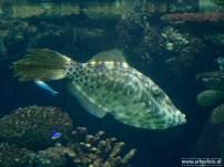 Burgers Zoo - Aquarium 03