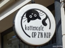 Kattencafe Op Zn Kop 01