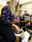 Kattencafe Op Zn Kop 06