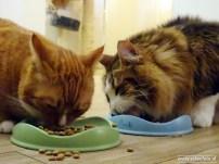 Kattencafe Op Zn Kop 13