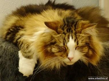 Kattencafe Op Zn Kop 17