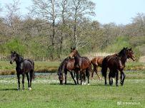 20200418_Paarden (Lettelberter Petten)