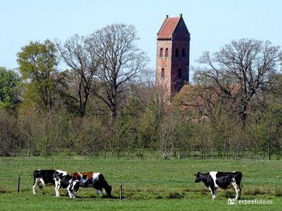 20200418_Zicht op Midwolde - kerk met koeien
