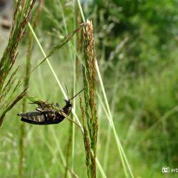 Insect, Wildemann De Harz Duitsland