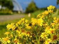 Bloemen achtergrond spoorburg Zuidhorn