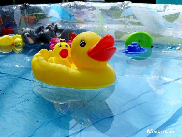 Rubber Eendje in het Zwembad