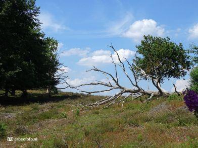 Nationaal Park Veluwezoom 05