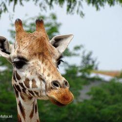Wildlands Adventure Zoo dierentuin Emmen