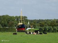 Zoutkamp Haven Schepen Koeien Schip op het Land