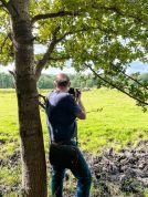 De konikspaarden fotograferen