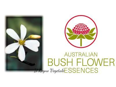 Bush Flowers singoli