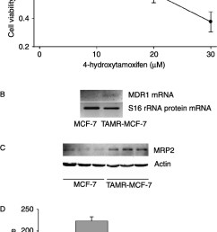 overexpression of mrp2 in tamr mcf 7 cells a cell viability after treating with 4 hydroxytamoxifen after treating mcf 7 and tamr mcf 7 cells with  [ 920 x 1800 Pixel ]