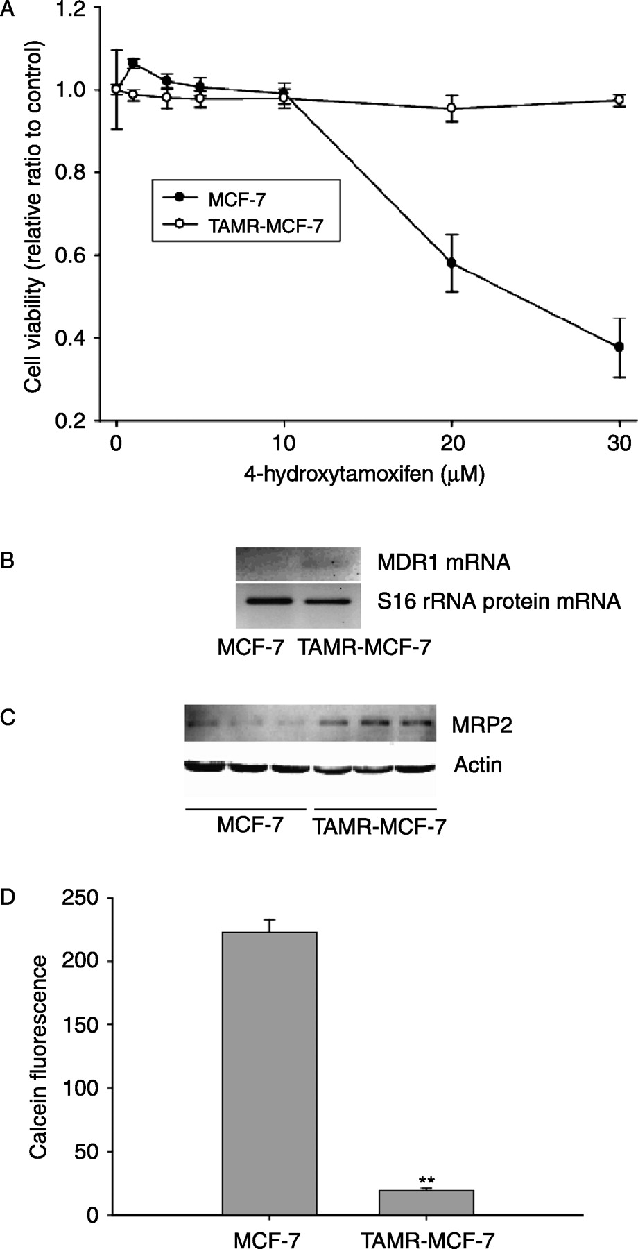 medium resolution of overexpression of mrp2 in tamr mcf 7 cells a cell viability after treating with 4 hydroxytamoxifen after treating mcf 7 and tamr mcf 7 cells with