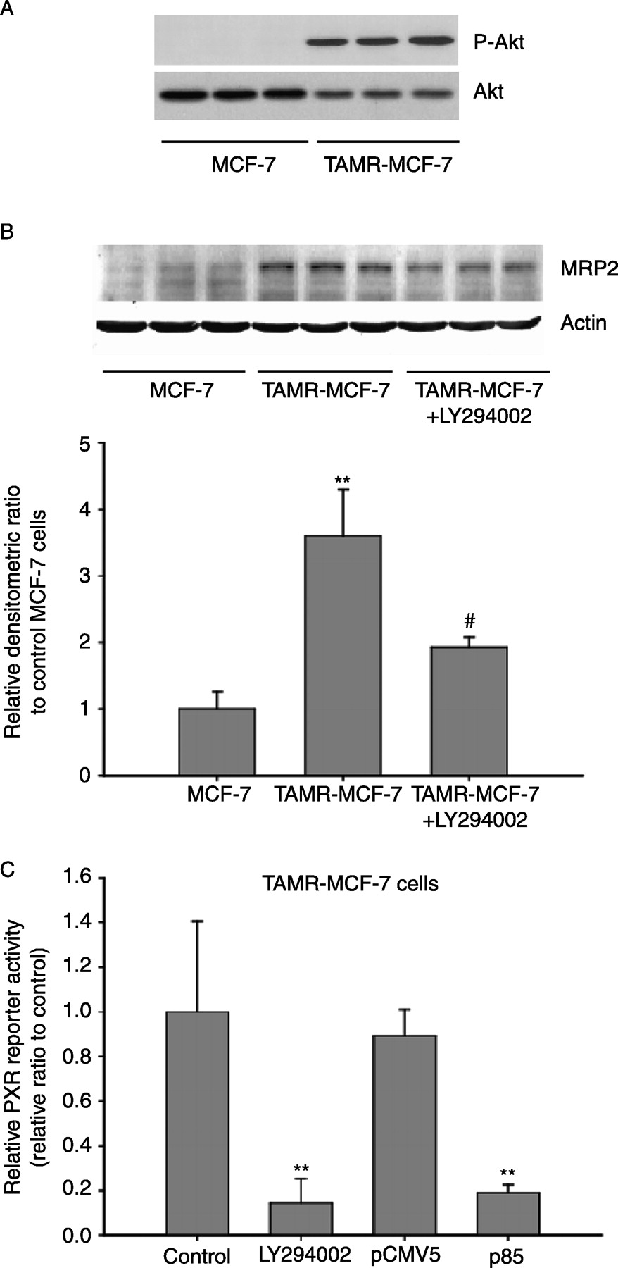 hight resolution of pi3 kinase dependent mrp2 expression in tamr mcf 7 cells a akt phosphorylation the extent of pi3 kinase activation was assessed by immunoblotting of