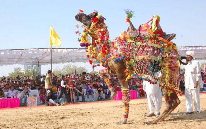 Camel Contests - Rajasthan Pushkar Fair