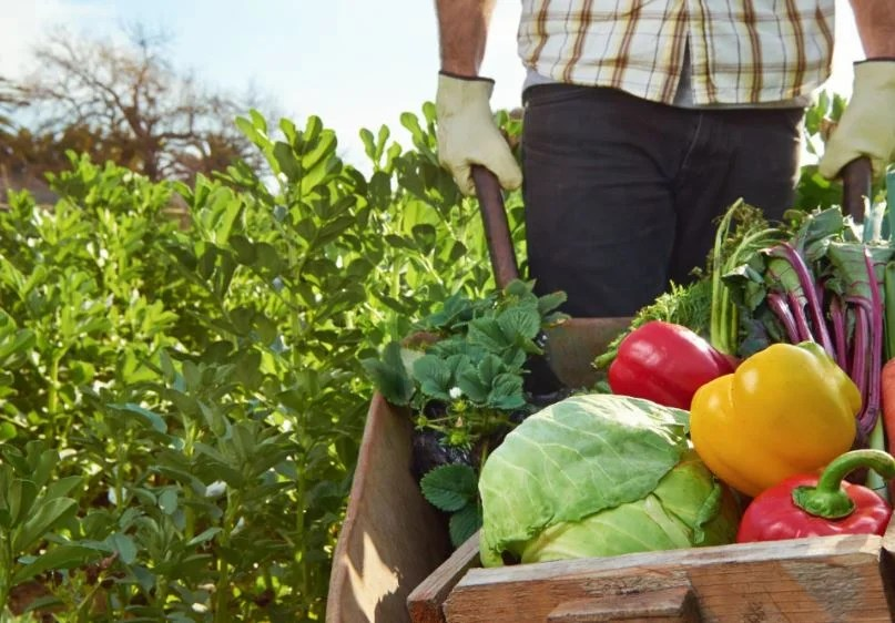 Agricultura de los alimentos ecológicos.