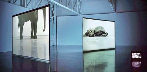 דאגלס גורדון - שחק מת; זמן אמת (פרט), 2003