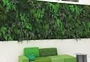 Mur végétal intérieur: naturel ou stabilisé, lequel choisir ?