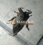 Το σπάνιο έντομο λιθόκερος εμφανίστηκε στην Χαλκιδική – Tο δάγκωμα του είναι δηλητηριώδες