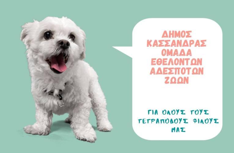 Ο δήμος Κασσάνδρας έχει δημιουργήσει μια ομάδα εθελοντών για τα αδέσποτα ζώα.