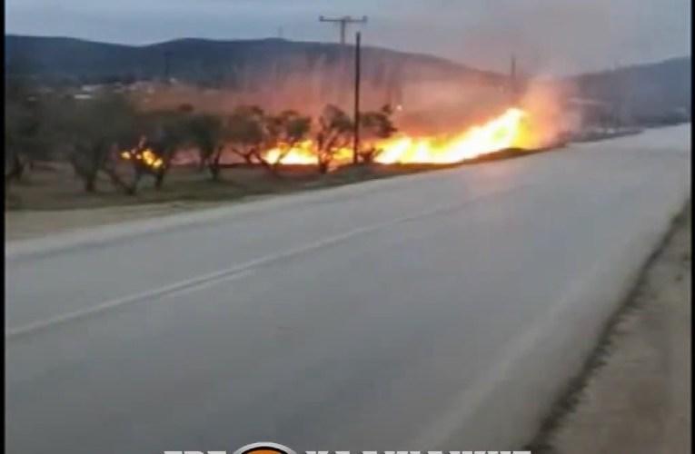 Χαλκιδική: Φωτιά ξέσπασε το πρωί στην Ορμύλια
