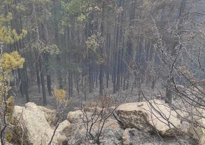 Σε πλήρη έλεγχο τέθηκε η δασική πυρκαγιά που ξέσπασε σε δύσβατη περιοχή του Χολομώντα (Φώτο)